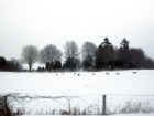 Photo of monochromatic winter scene. Fence and grass near, headstones in the midground, leafless trees at the horizon's edge. Ground covered in snow.