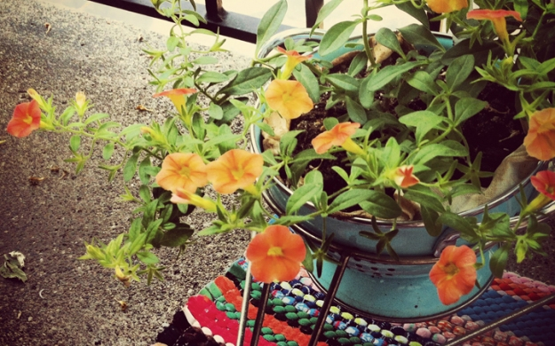 "Creamy orange/salmon ""dreamsicle"" flowering plant (petunia?) in old blue colander standing in strainer holder, above handmade brightly striped braided rug"